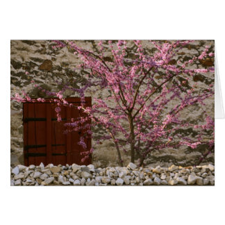 Red Bud Tree Card