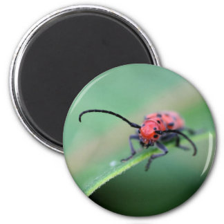 Red Bug With Attitude Nature Photography Magnet