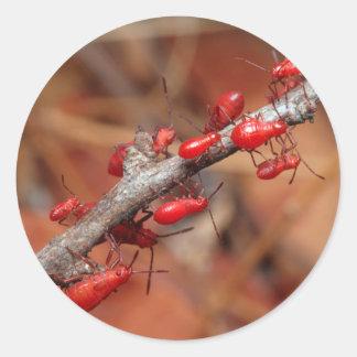 Red Bugs (Pyrrhocoridea) Feeding. Kruger Classic Round Sticker