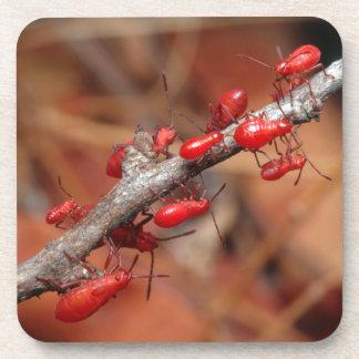 Red Bugs (Pyrrhocoridea) Feeding. Kruger Drink Coaster