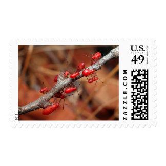 Red Bugs (Pyrrhocoridea) Feeding. Kruger Postage