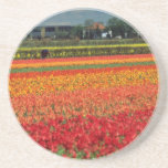 Red Bulb growing, Lisse, Holland flowers Beverage Coasters