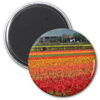 Red Bulb growing, Lisse, Holland flowers Magnets