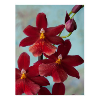 Red Burrageara Postcard