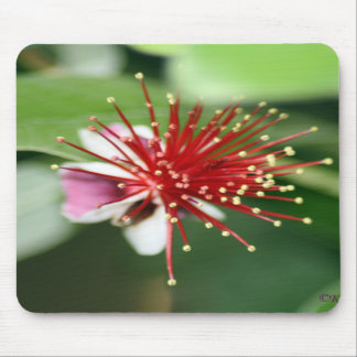 Red Burst Mouse Pad