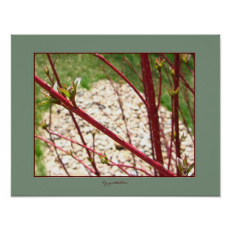 Red Bush and Buds Poster by gretchen