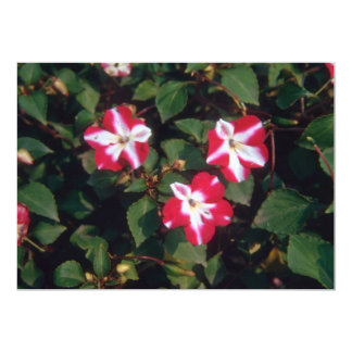 Red Busy Lizzy (Impatiens Wallerana) flowers 5x7 Paper Invitation Card