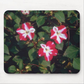 Red Busy Lizzy (Impatiens Wallerana) flowers Mouse Pad