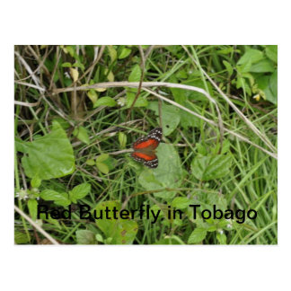Red Butterfly in Tobago Postcard
