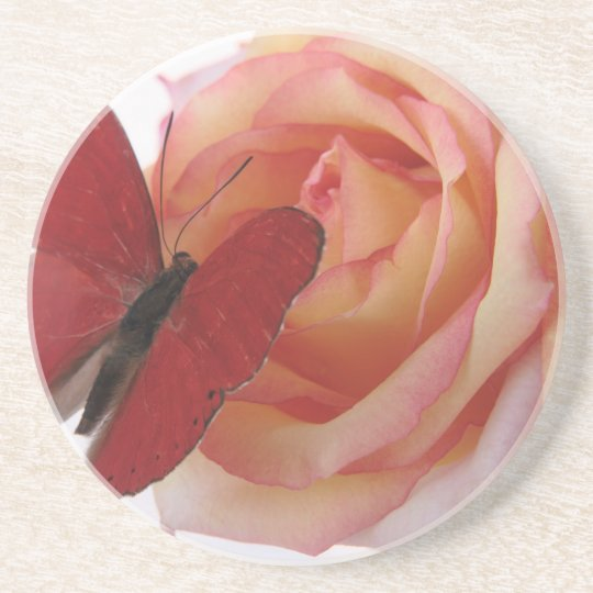 red butterfly on pink rose sandstone coaster