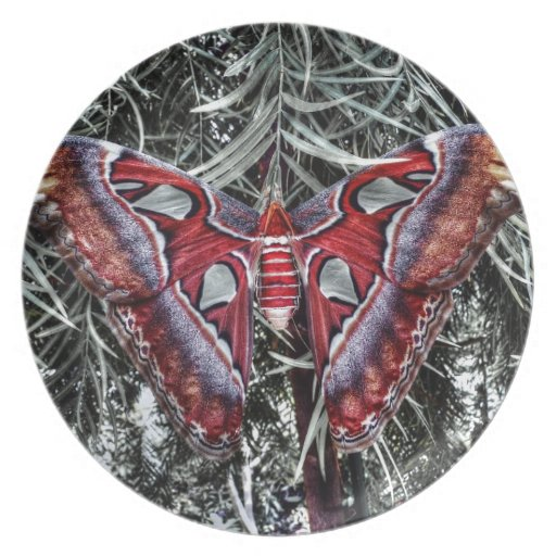 Red Butterfly Plate