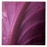Red Cabbage Tiles