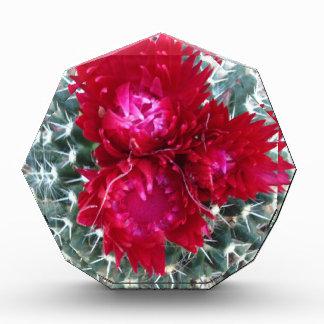 Red Cactus Flower Award