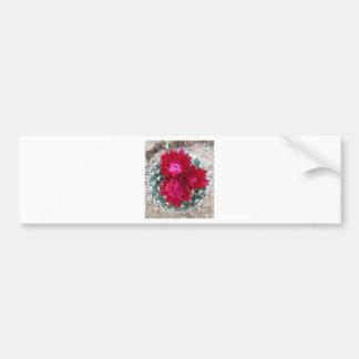 Red Cactus Flower Bumper Sticker