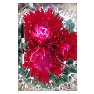 Red Cactus Flower Dry Erase Board