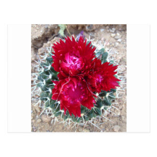 Red Cactus Flower Postcard