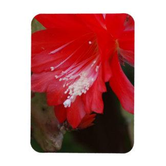 Red Cactus Flowering Flexible Magnet