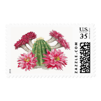 Red Cactus flowers Postage