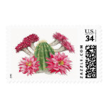 Red Cactus flowers Postage Stamp