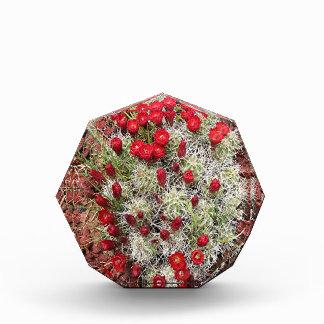 Red cactus flowers, Utah, USA Awards