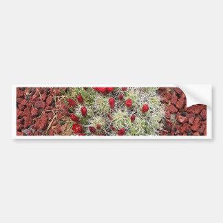 Red cactus flowers, Utah, USA Bumper Sticker