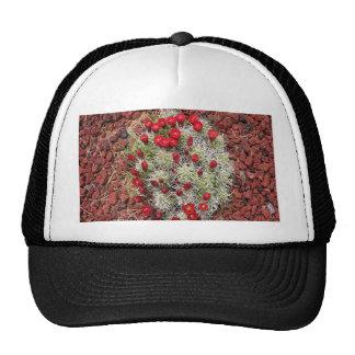 Red cactus flowers, Utah, USA Trucker Hat
