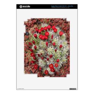Red cactus flowers, Utah, USA Skin For iPad 3