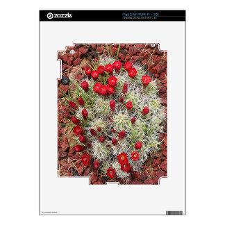 Red cactus flowers, Utah, USA Skins For The iPad 2