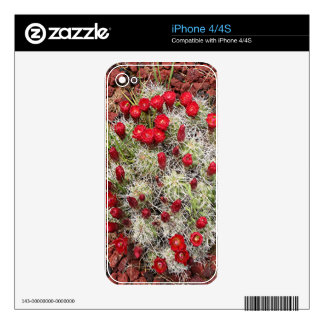 Red cactus flowers, Utah, USA Skins For The iPhone 4
