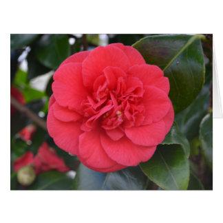 Red Camelia Flower Card