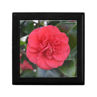 Red Camelia Flower Gift Box