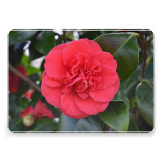 Red Camelia Flower Announcements