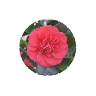 Red Camelia Flower Jelly Belly Candy Tins