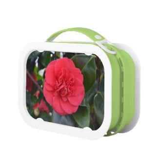 Red Camelia Flower Lunch Boxes