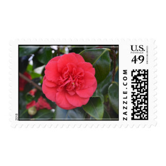 Red Camelia Flower Postage