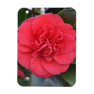 Red Camelia Flower Vinyl Magnet