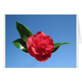 Red Camelia in Blue Sky Card