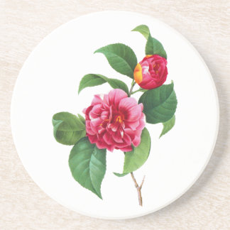 Red Camellia by Pierre Joseph Redoute Drink Coaster