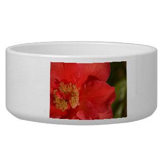 Red Camellia Flower Bowl