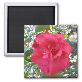 Red Camellia Flower Magnet