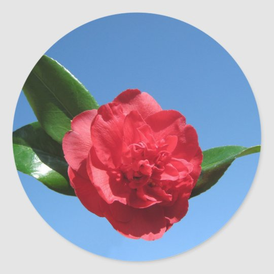 Red Camellia in Blue Sky Classic Round Sticker