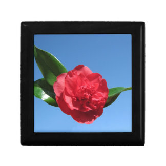 Red Camellia in Blue Sky Gift Box