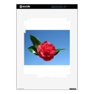 Red Camellia in Blue Sky iPad 2 Skins