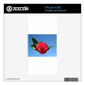 Red Camellia in Blue Sky iPhone 4S Skins