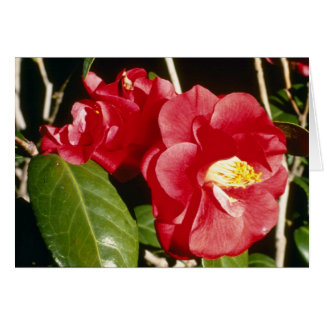 Red Camellia Japonica 'A. Audusson' Greeting Card