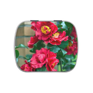 Red Camellia Jelly Belly Candy Tins
