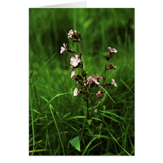 Red Campion Card