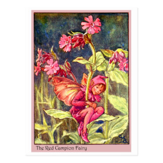 Red Campion Fairy Postcard