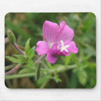 Red Campion Wildflower Mousepad