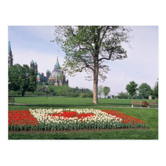 Red Canadian flag with tulips, Major's Hill Park, Postcard